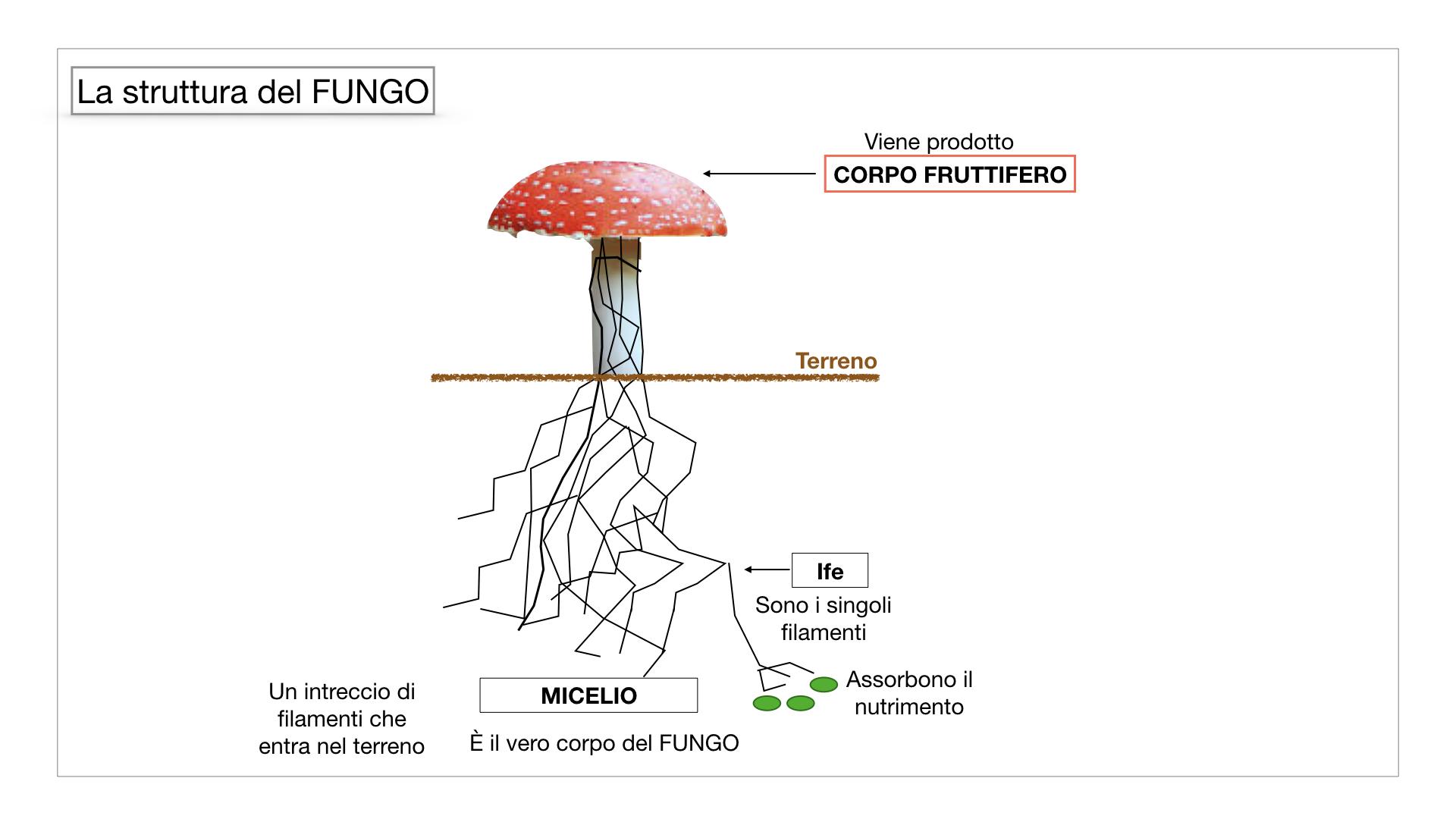 9. i funghi_SIMULAZIONE PARTE1.030