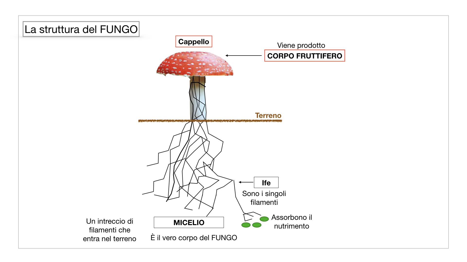 9. i funghi_SIMULAZIONE PARTE1.031