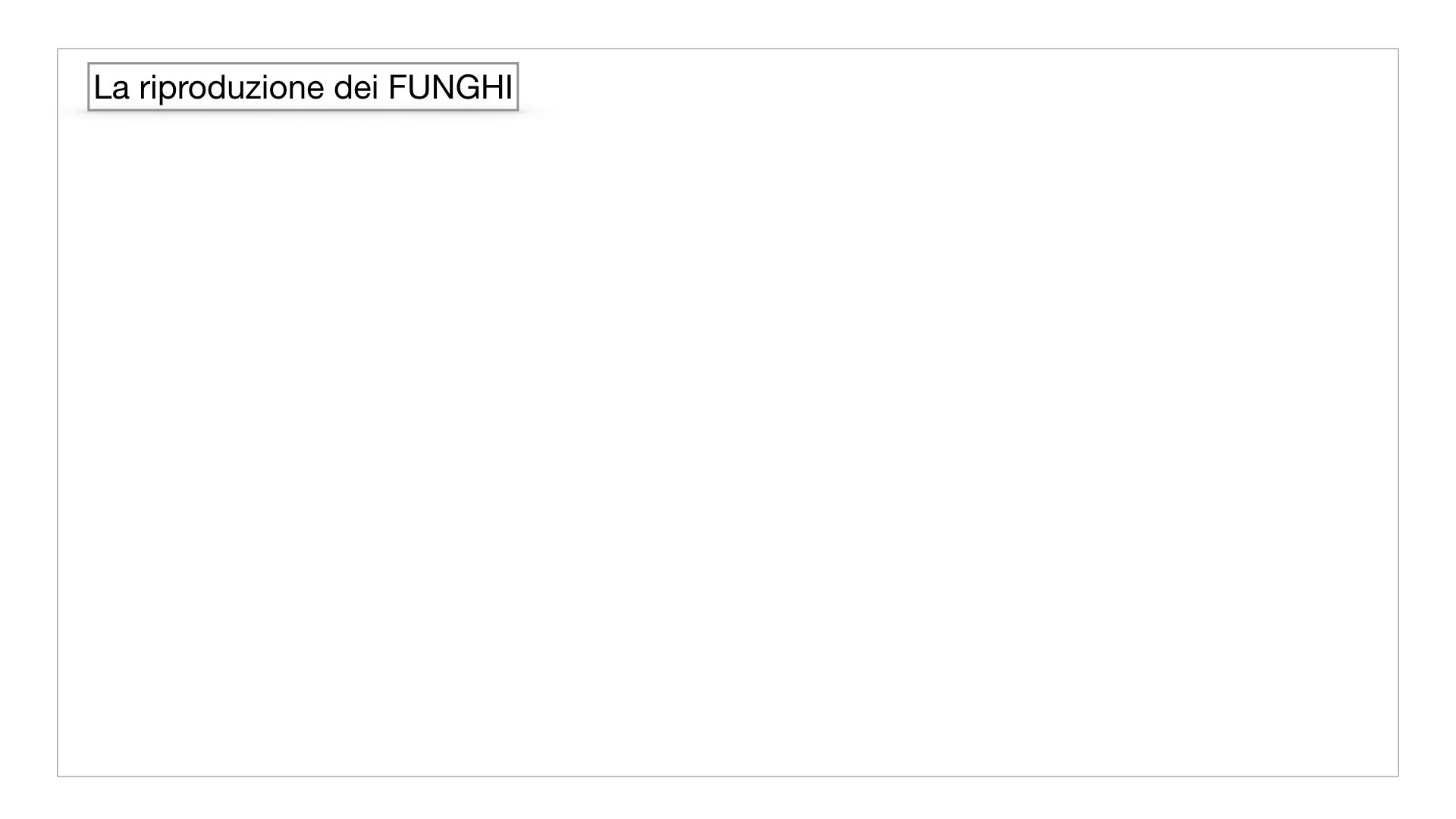 9. i funghi_SIMULAZIONE PARTE1.035