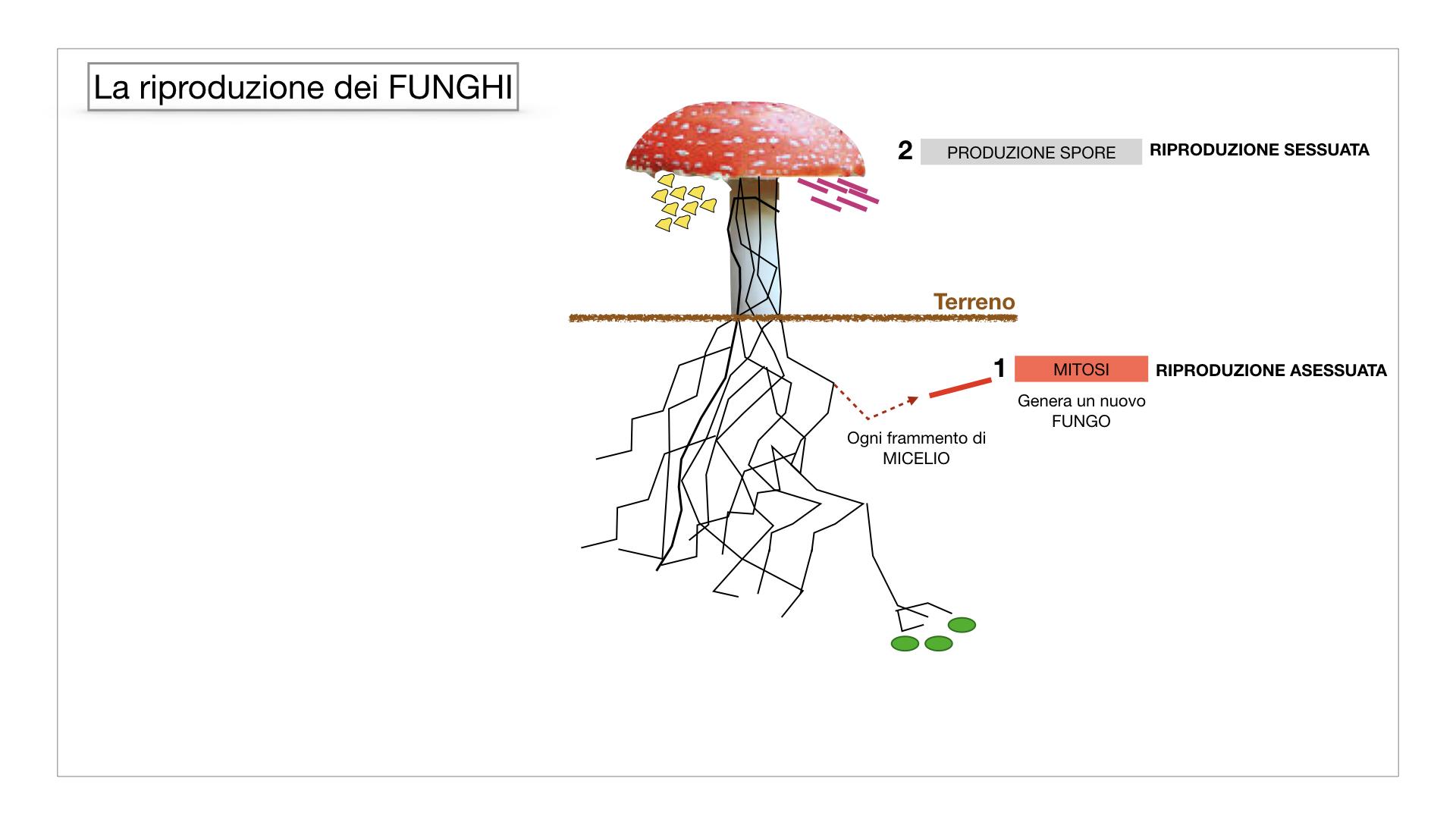 9. i funghi_SIMULAZIONE PARTE1.041