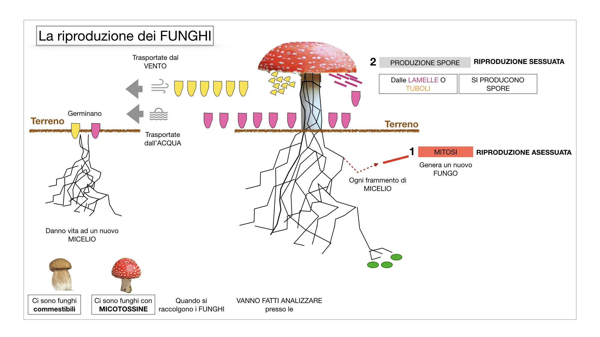 9. i funghi_SIMULAZIONE PARTE1.051