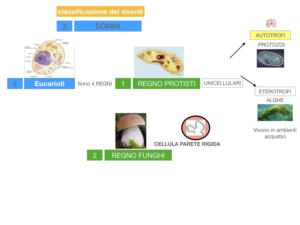 domini_regni_biodiversità_SIMULAZIONE.030