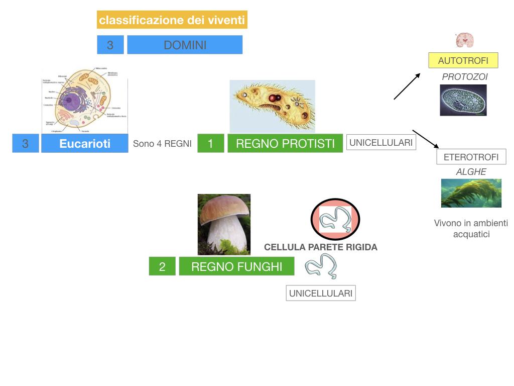 domini_regni_biodiversità_SIMULAZIONE.031