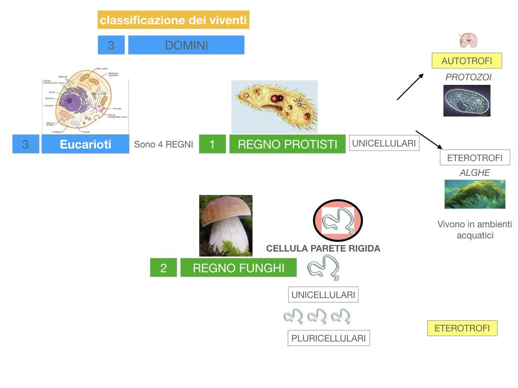 domini_regni_biodiversità_SIMULAZIONE.033