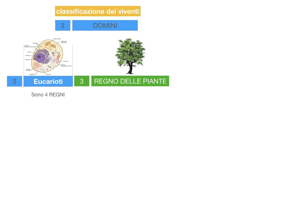 domini_regni_biodiversità_SIMULAZIONE.037
