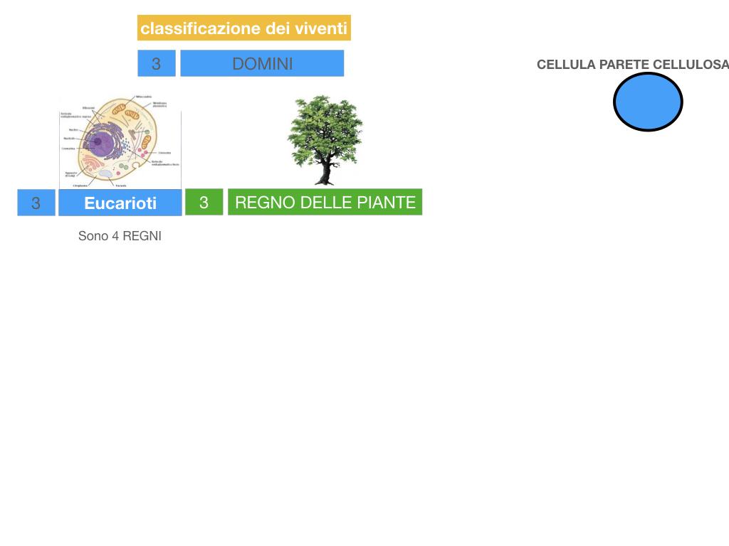 domini_regni_biodiversità_SIMULAZIONE.038