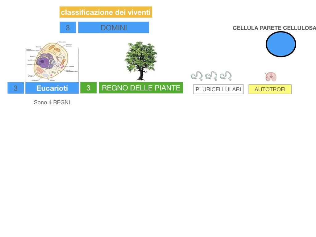 domini_regni_biodiversità_SIMULAZIONE.040
