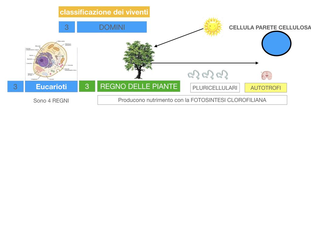domini_regni_biodiversità_SIMULAZIONE.041