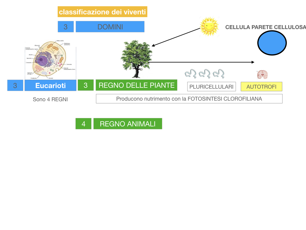 domini_regni_biodiversità_SIMULAZIONE.042
