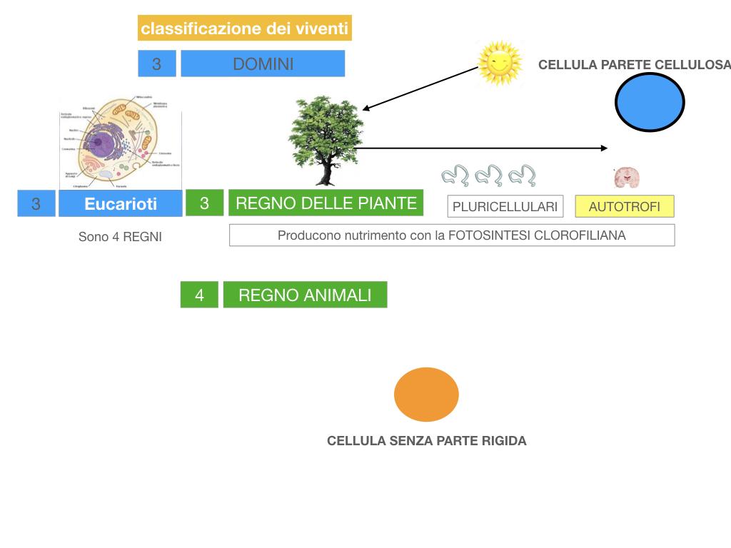 domini_regni_biodiversità_SIMULAZIONE.043