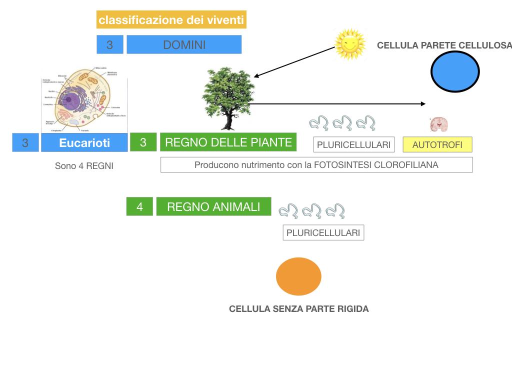 domini_regni_biodiversità_SIMULAZIONE.044
