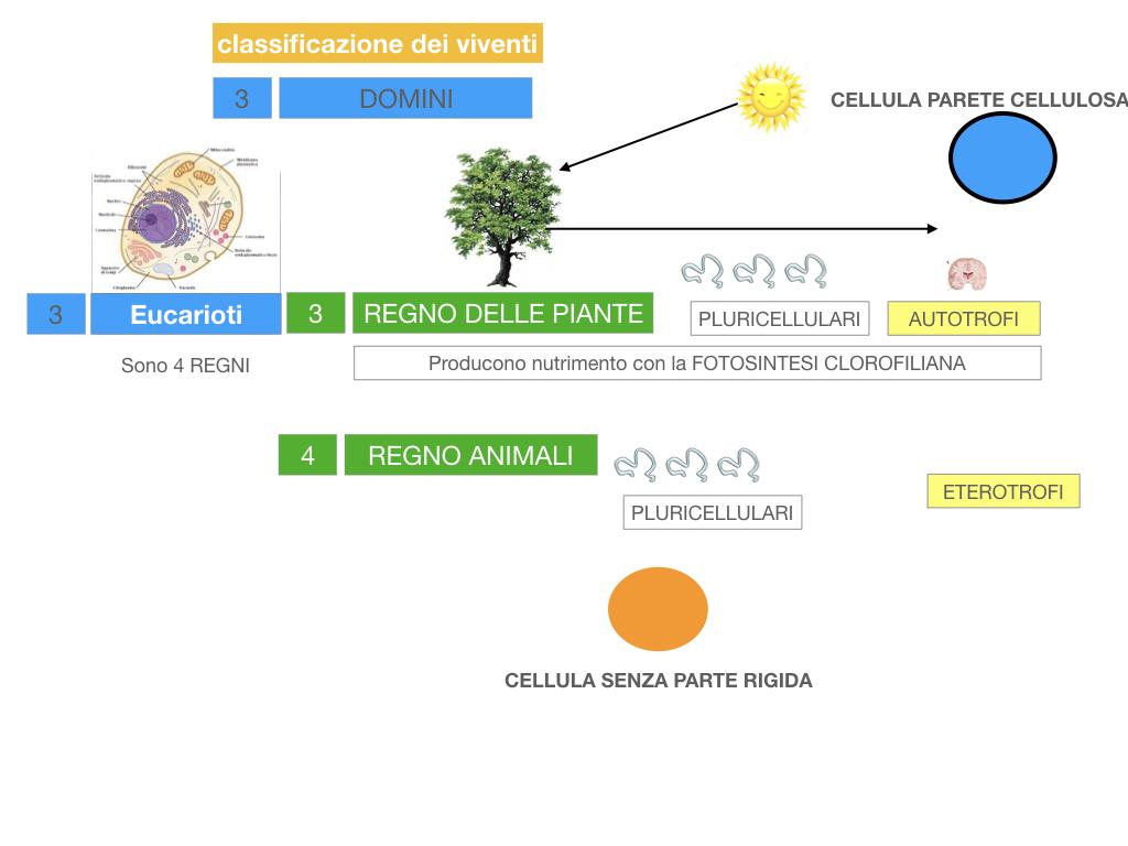 domini_regni_biodiversità_SIMULAZIONE.045