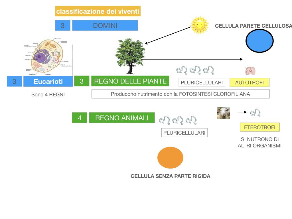 domini_regni_biodiversità_SIMULAZIONE.046