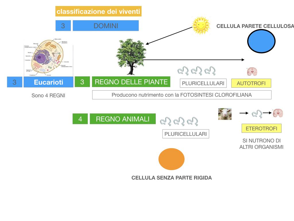 domini_regni_biodiversità_SIMULAZIONE.047