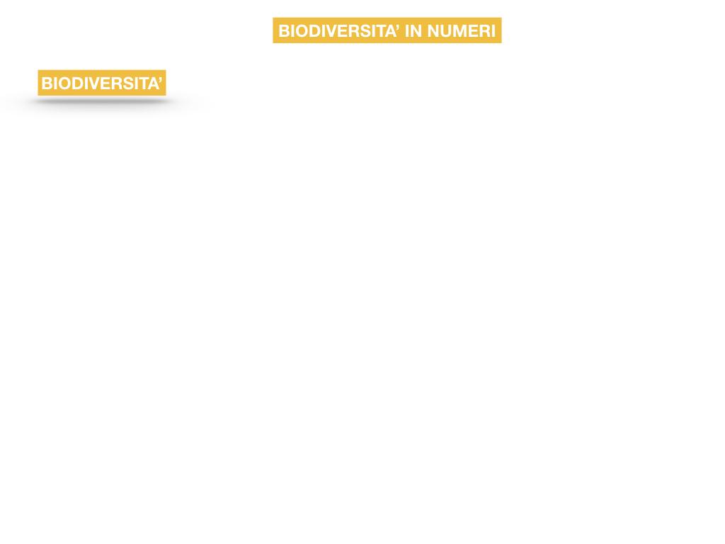 domini_regni_biodiversità_SIMULAZIONE.049