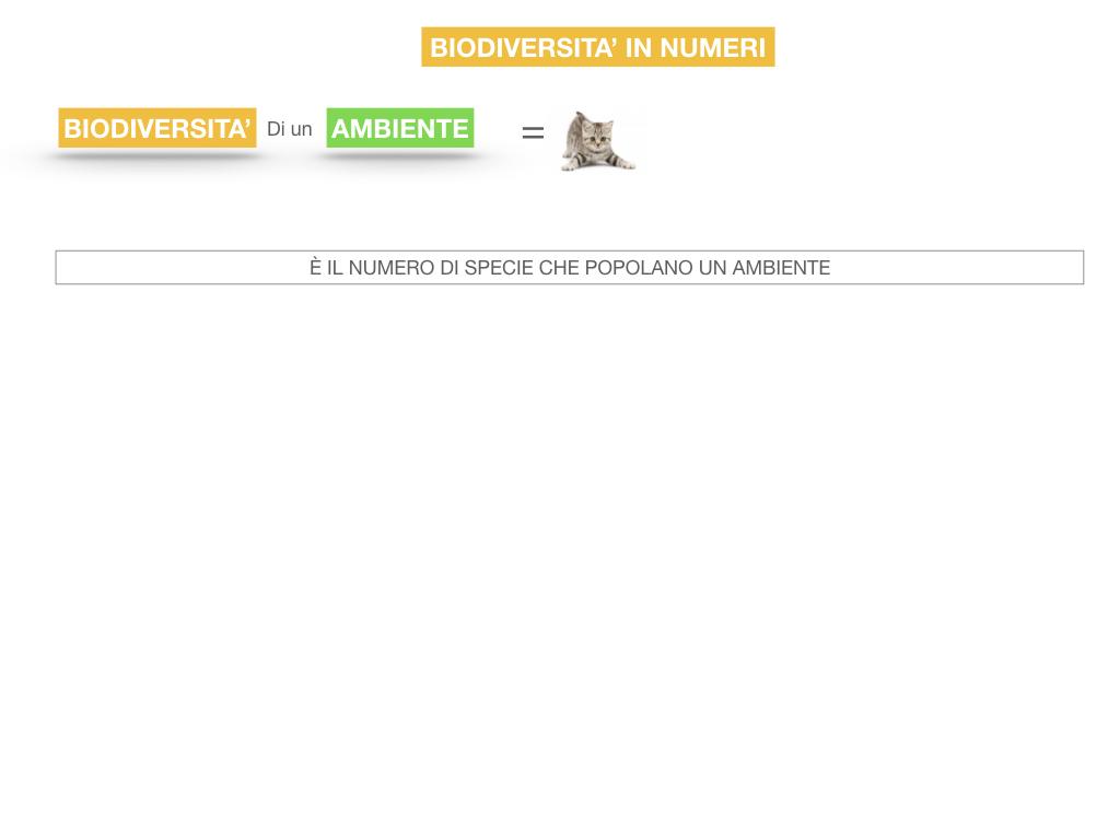 domini_regni_biodiversità_SIMULAZIONE.051