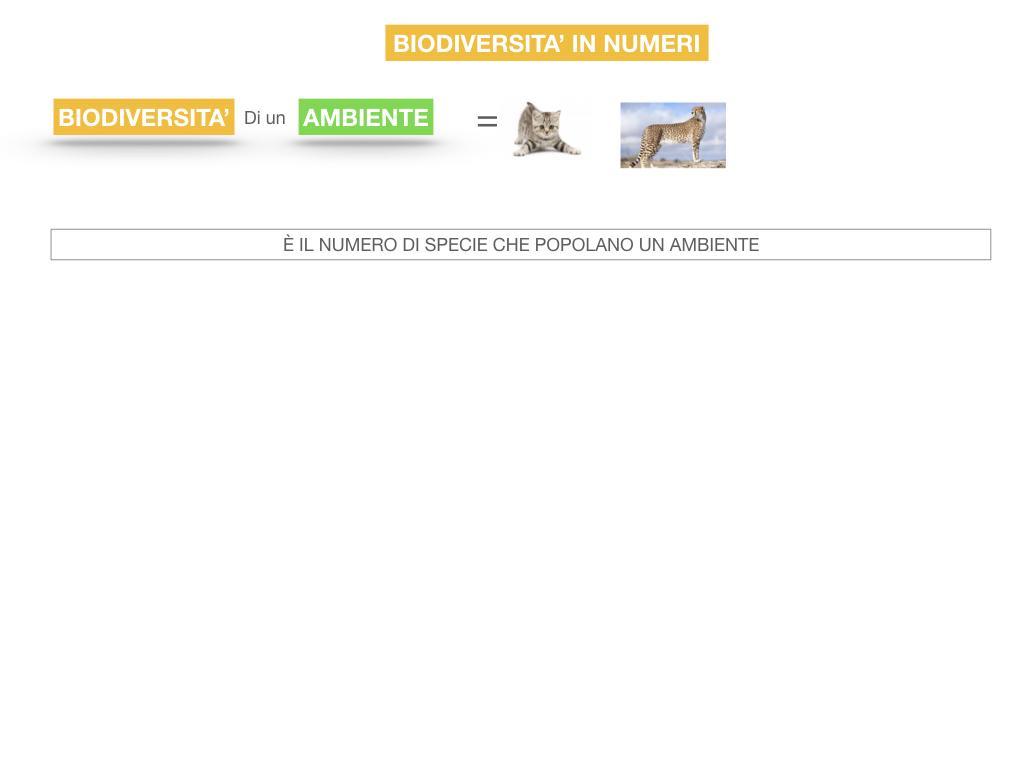 domini_regni_biodiversità_SIMULAZIONE.052