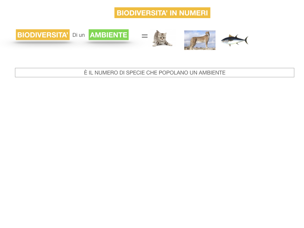 domini_regni_biodiversità_SIMULAZIONE.053