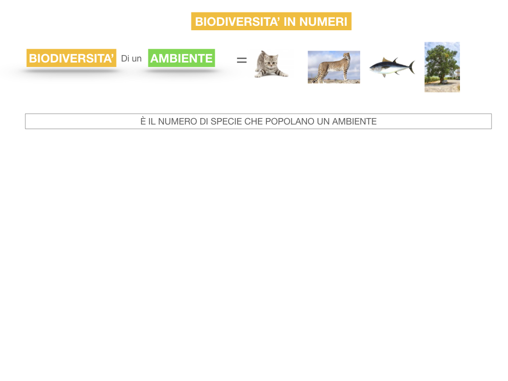 domini_regni_biodiversità_SIMULAZIONE.054