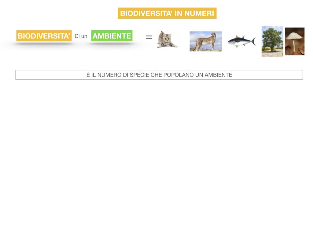 domini_regni_biodiversità_SIMULAZIONE.055