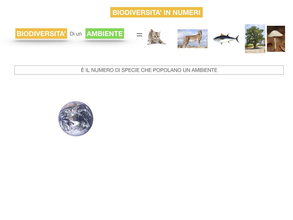 domini_regni_biodiversità_SIMULAZIONE.056