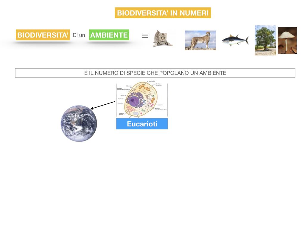 domini_regni_biodiversità_SIMULAZIONE.057