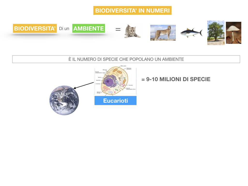 domini_regni_biodiversità_SIMULAZIONE.058