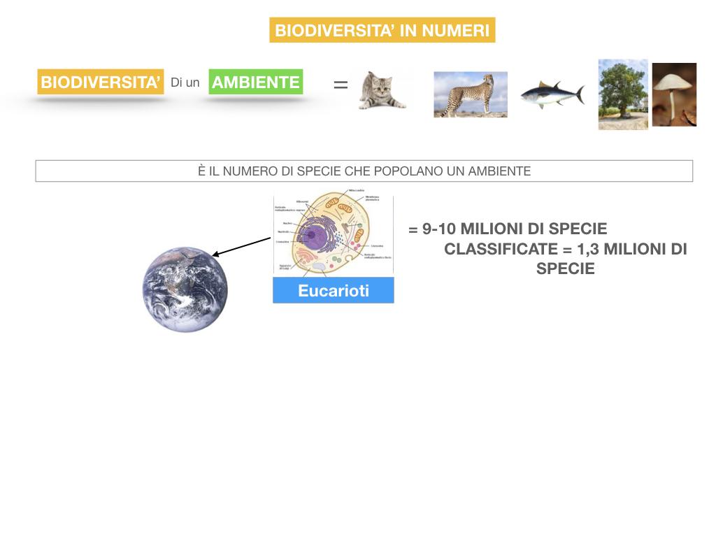 domini_regni_biodiversità_SIMULAZIONE.059