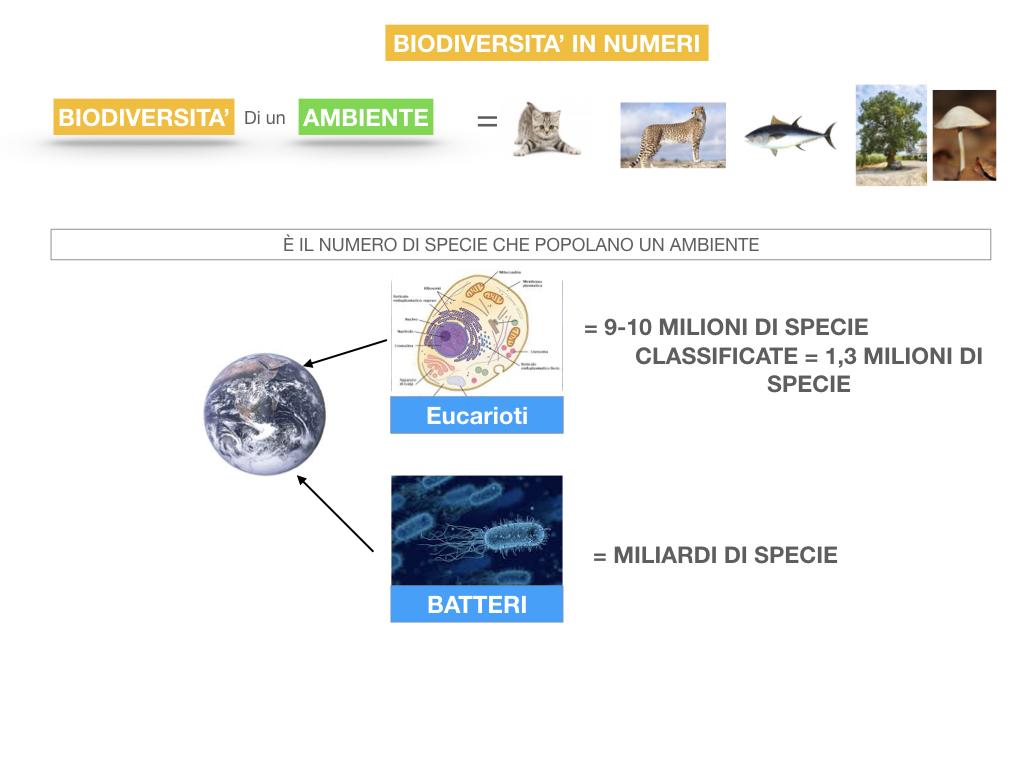 domini_regni_biodiversità_SIMULAZIONE.060