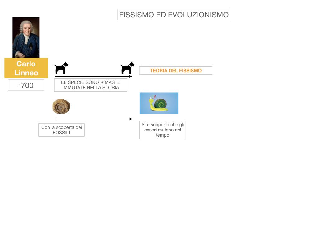 scienze_evoluzionismo_darwin_SIMULAZIONE.005