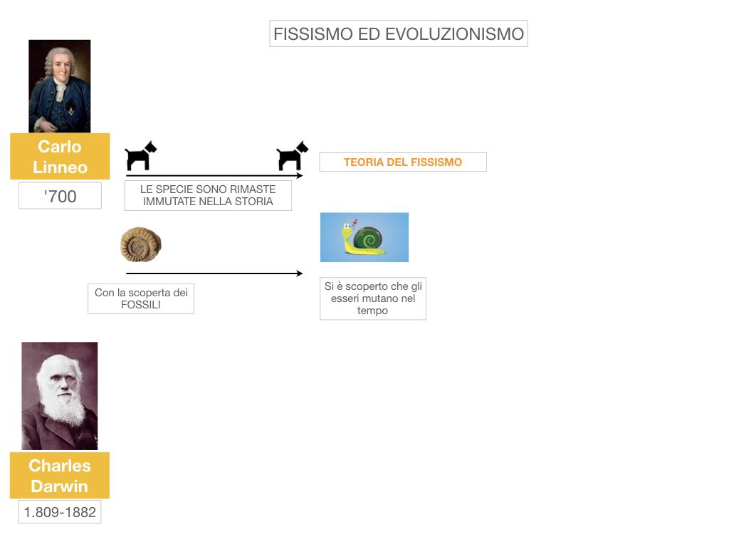 scienze_evoluzionismo_darwin_SIMULAZIONE.006