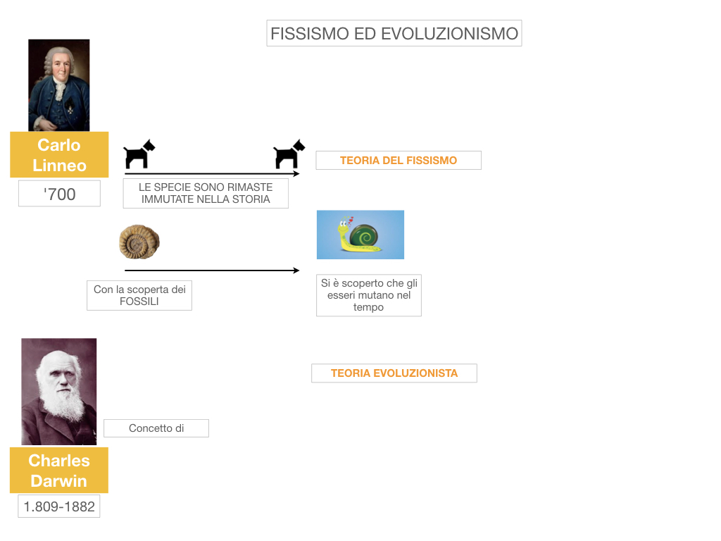 scienze_evoluzionismo_darwin_SIMULAZIONE.007