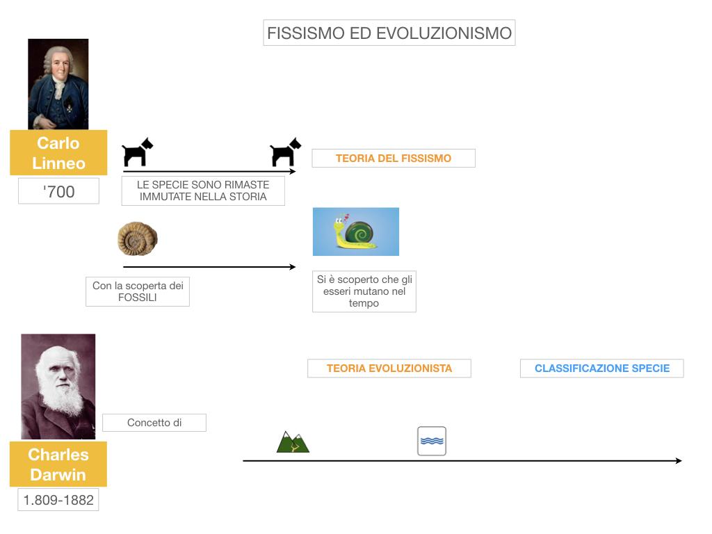 scienze_evoluzionismo_darwin_SIMULAZIONE.009