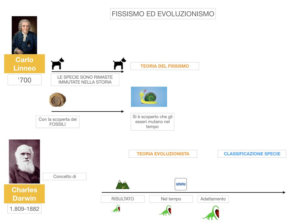 scienze_evoluzionismo_darwin_SIMULAZIONE.012
