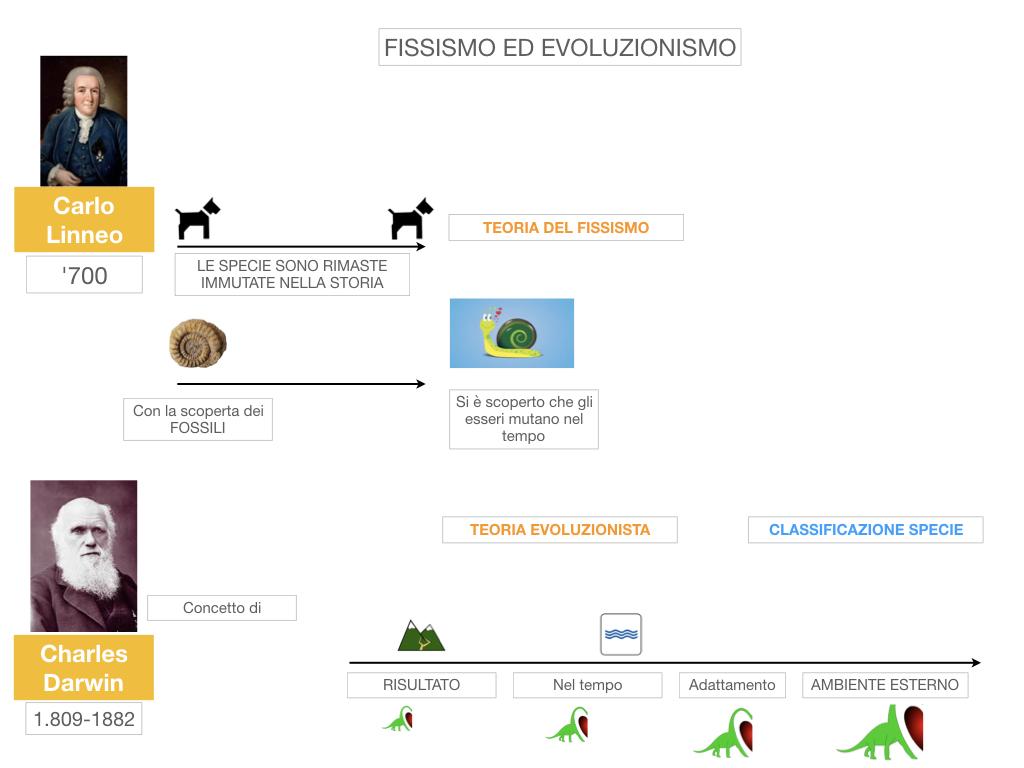 scienze_evoluzionismo_darwin_SIMULAZIONE.013