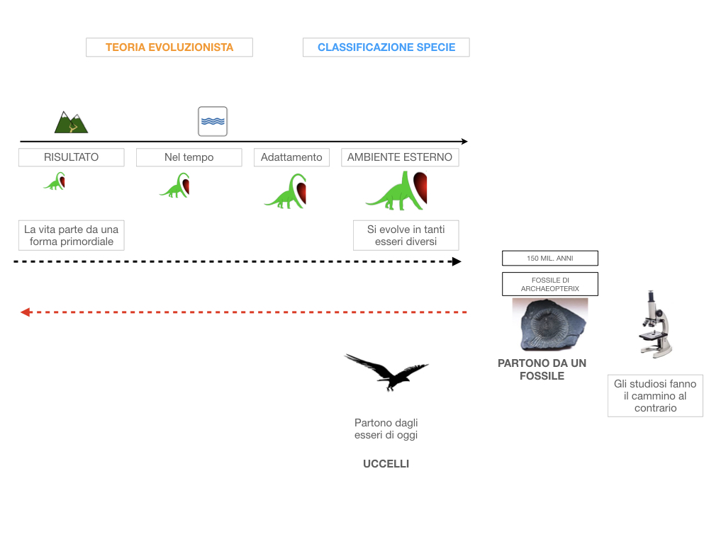 scienze_evoluzionismo_darwin_SIMULAZIONE.023