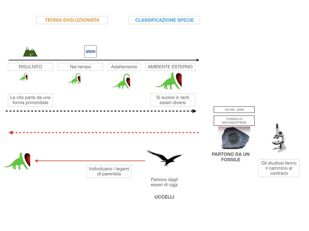scienze_evoluzionismo_darwin_SIMULAZIONE.024