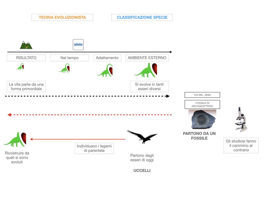 scienze_evoluzionismo_darwin_SIMULAZIONE.025