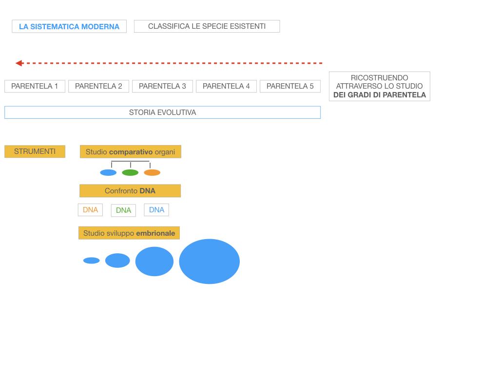 scienze_evoluzionismo_darwin_SIMULAZIONE.035