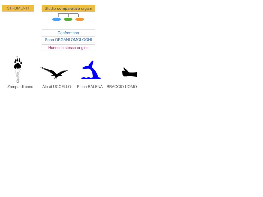 scienze_evoluzionismo_darwin_SIMULAZIONE.075