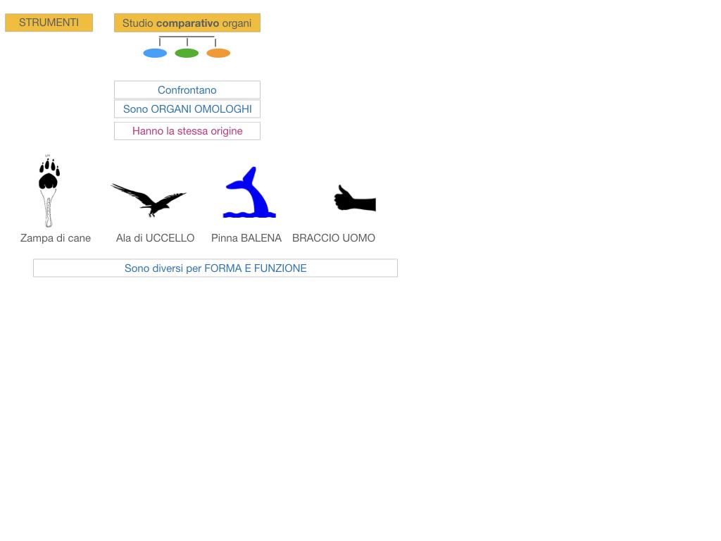 scienze_evoluzionismo_darwin_SIMULAZIONE.076