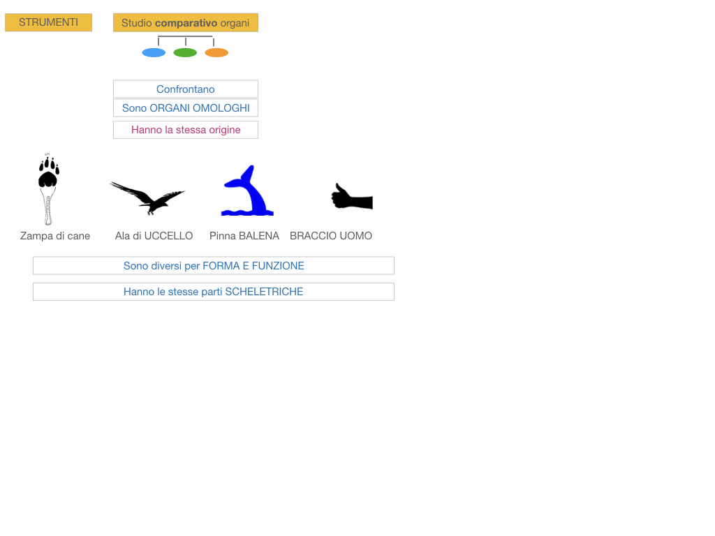 scienze_evoluzionismo_darwin_SIMULAZIONE.077