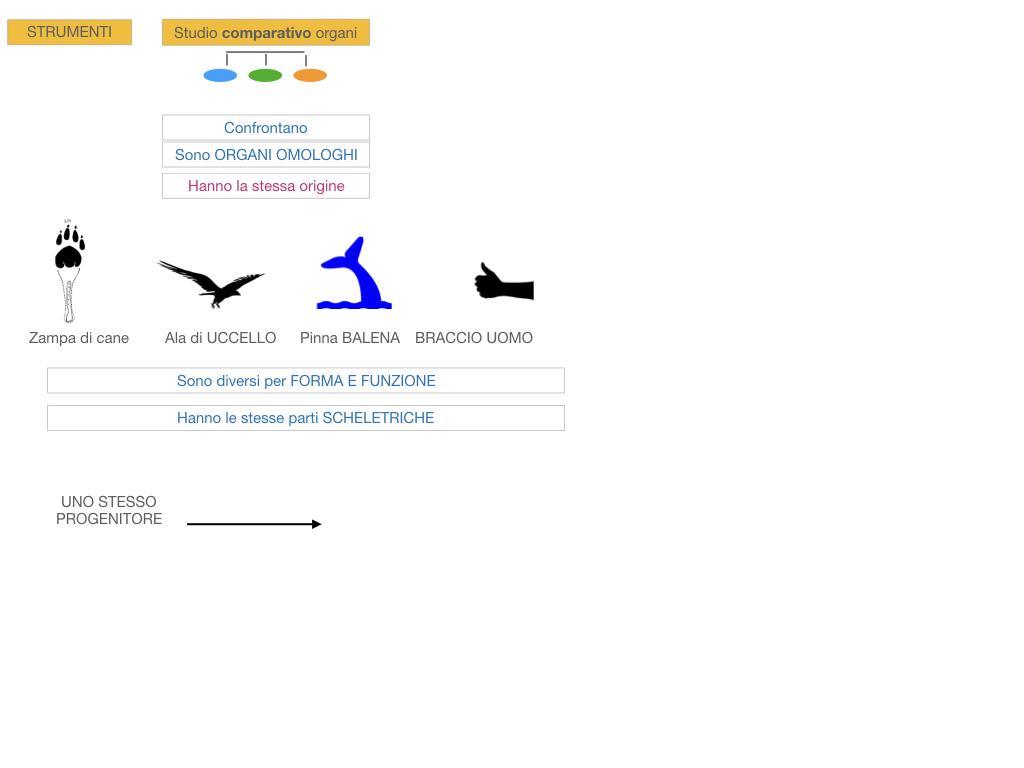 scienze_evoluzionismo_darwin_SIMULAZIONE.078