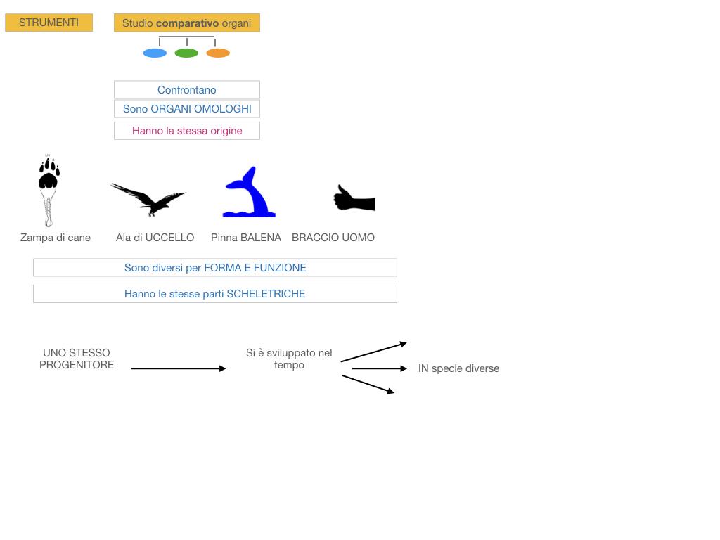 scienze_evoluzionismo_darwin_SIMULAZIONE.080