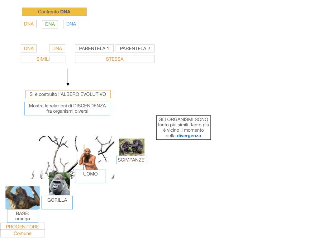 scienze_evoluzionismo_darwin_SIMULAZIONE.099