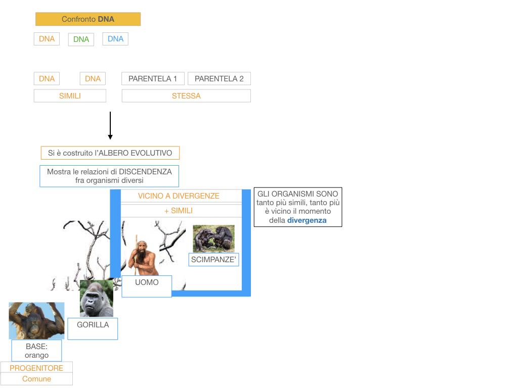 scienze_evoluzionismo_darwin_SIMULAZIONE.100