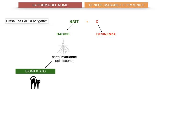 7.1.GRAMMATICA_NOMI_FORMA_GENERE_SIMULAZIONE.006