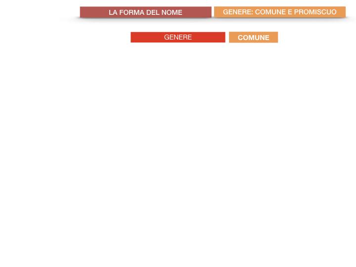 7.1.GRAMMATICA_NOMI_FORMA_GENERE_SIMULAZIONE.046