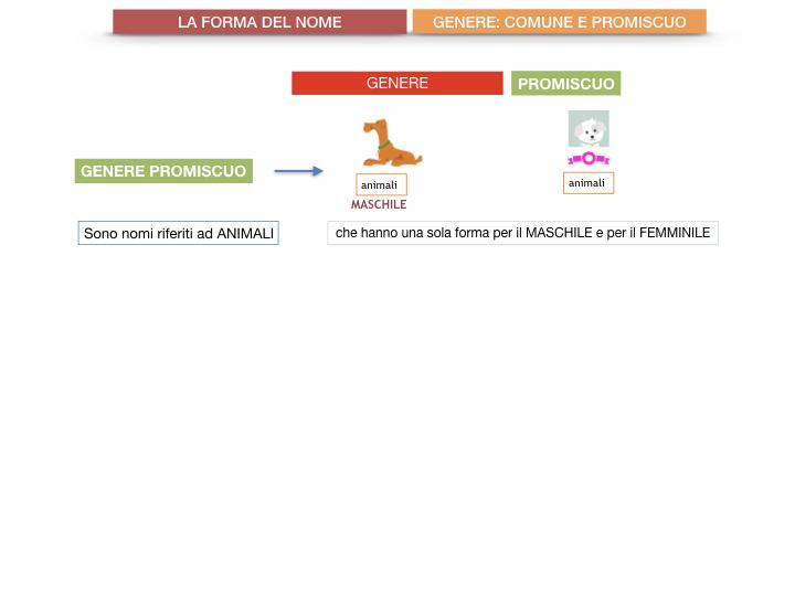 7.1.GRAMMATICA_NOMI_FORMA_GENERE_SIMULAZIONE.075