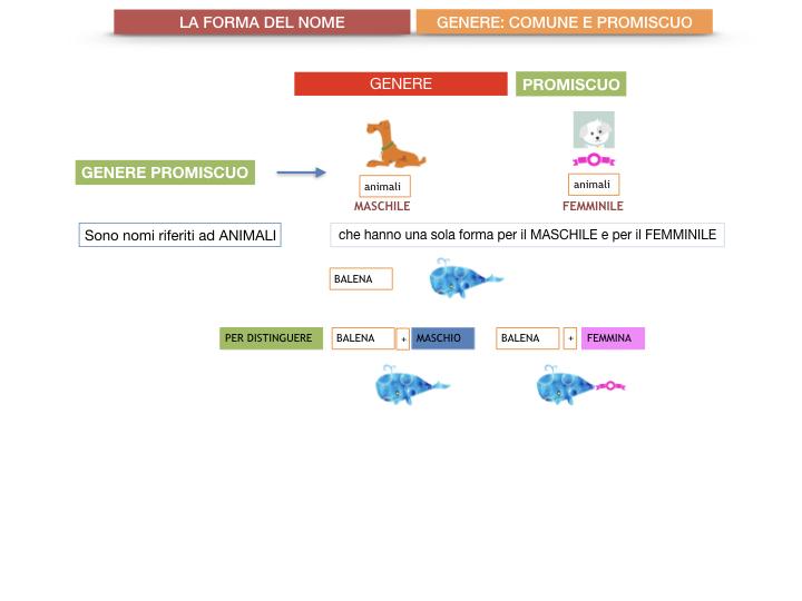 7.1.GRAMMATICA_NOMI_FORMA_GENERE_SIMULAZIONE.079